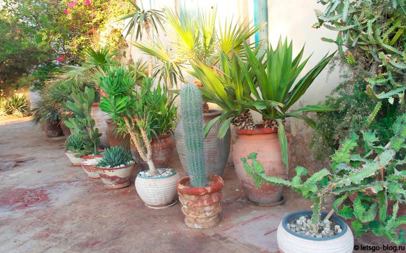 Кактусы. Даунтаун Эль-Гуна, Египет