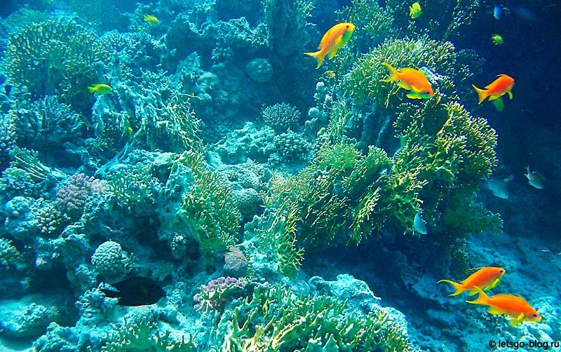Коралловый риф в Красном море, Хургада