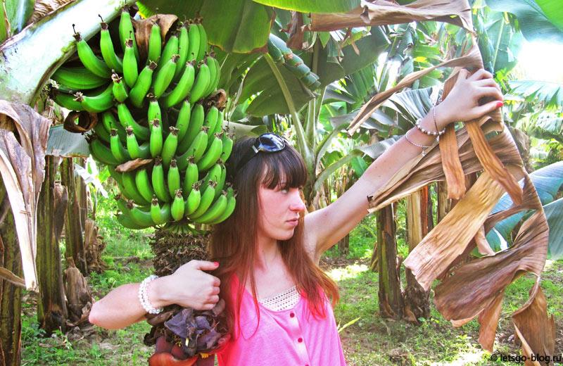 Луксор. Банановый остров