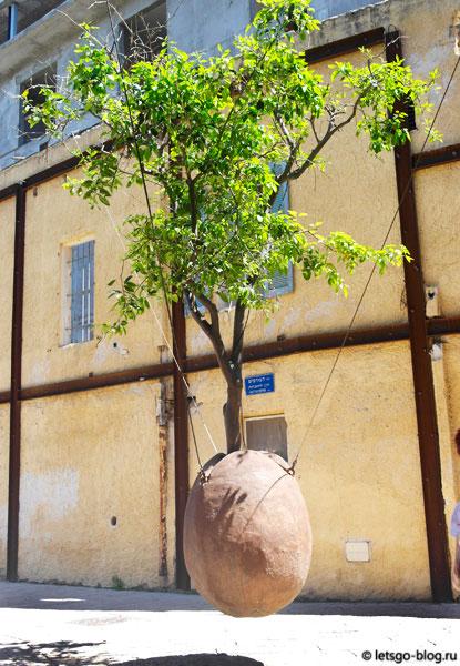 Старый Яффо, Парящее апельсиновое дерево