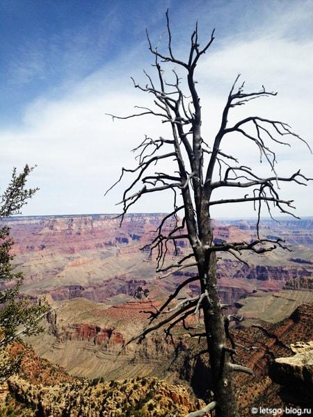 Большой каньон, Grandview point (Грандвью поинт)