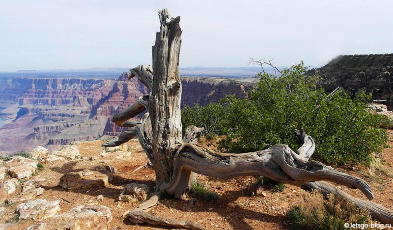 Большой каньон, Navajo point (Навахо поинт)