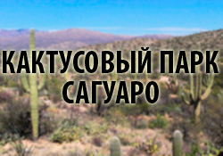 кактусовый парк сагуаро