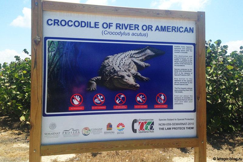 Крокодилы в Канкуне