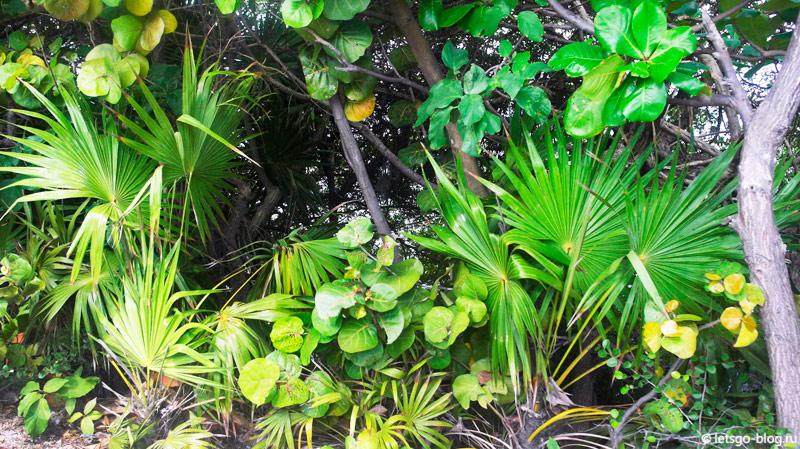 Мексика мангровые заросли