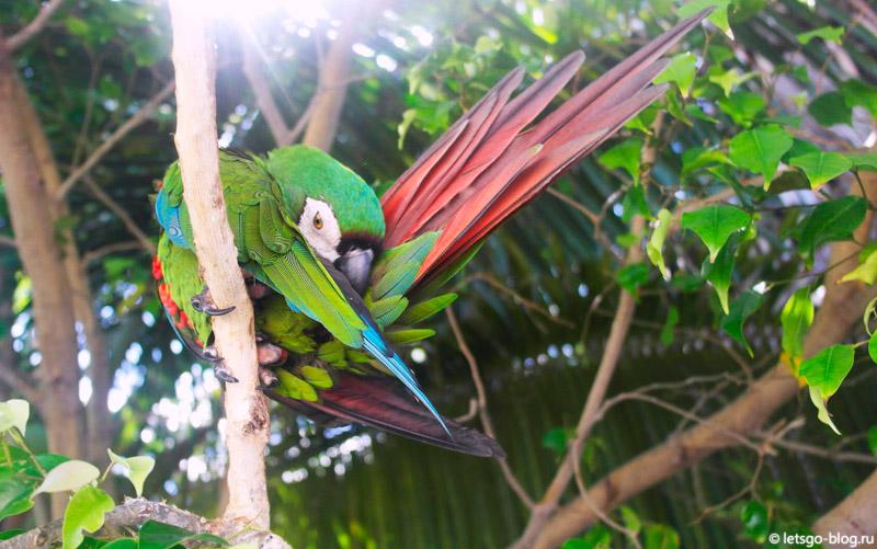 Попугай Мексика