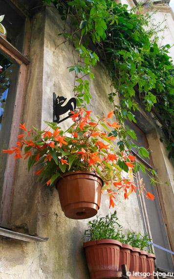 Бабушкин дворик с черными кошками питер