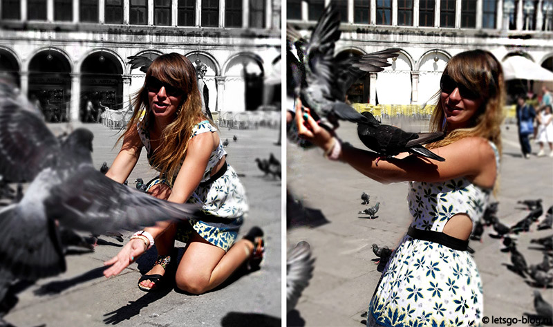 Венеция голуби