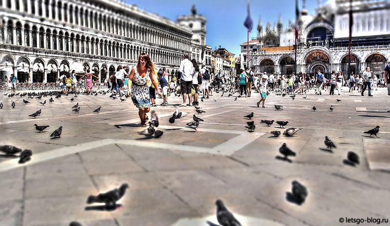 Площадь Сан Марко голуби